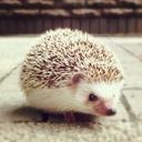 Hedgehog Weekly Report