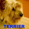 英単語が増える!語源イメージ (2) TERRIER : 地球の犬