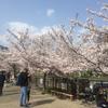 春と言えば、恒例の異常な寒さの中のお花見!