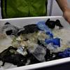 2021.7.15 保護されたウミガメが1カ月以上プラごみ排出 海遊館