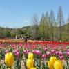 世羅高原農場の花畑風景 NO,3(広島県世羅町)