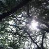 【写真】公園で友達のプロフィール写真を撮ってきました