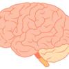 【小児】神経発達症(神経発達障害)とは