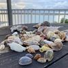 2020.9.13 台風一過の沖縄本島で貝殻拾い
