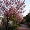 年度末の桜