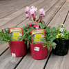 寄せ植え用花苗購入