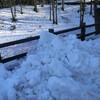 雪の上のユキヒョウ
