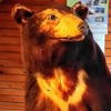 【閲覧】クマが怖い【注意】