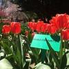 おでかけ⑪ ~Tulip Top Gardens~