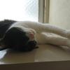今日の黒猫モモ&白黒猫ナナの動画ー1037