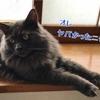 お仏壇は猫にとって要注意!?