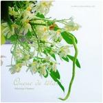 モリンガの花と豆の鞘。そしてベランダのお客様
