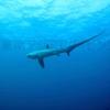 マラパスクア島のダイビングサイト紹介(モナドショール)