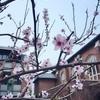 春号🌸入稿!