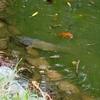 かがみの池(高知県香美)