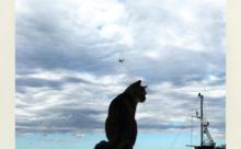ネコ英語「やっぱりネコは絵になる」