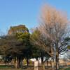 神社遺跡 葛飾区 水元公園内 須賀神社 初詣?