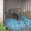 八木山動物公園 レポ