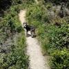 犬と山登りを始めたきっかけ