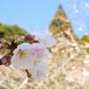 気分転換は春の花を愛でに