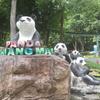 パンダに会いにチェンマイ動物園へ!行き方&園内解説【子連れチェンマイ旅行記④】
