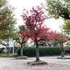庭白公園へ早朝ウォーキング