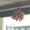 湖西市でウッドデッキの下に出来た蜂の巣を退治してきました!