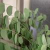 たまには植物の本でも 『植物 奇跡の化学工場』を読む