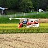 近所で稲刈り