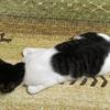 猫の座り方にも呼び名がある?猫の様々な姿勢と座り方