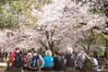 春の奈良公園は桜と鹿と外国人観光客でどこも賑やか