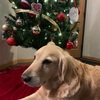 Early Christmas Present 🎄♥️