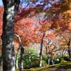 【2017/11/24 箱根紅葉情報】箱根美術館を散策しました。