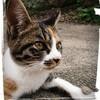 三毛猫…モデル的なボヤキ