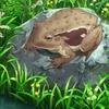 のんのんびより のんすとっぷ 第1話「カエルの歌を吹いた」の感想・レビュー