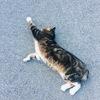 腹筋は割れたのに太ももに隙き間ができたことのない人間の足痩せ奮闘記