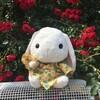 バラの花が咲いた!ローズは心を癒して幸福感をもたらします