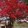 高雄嵐山パークウェイの絶景!京都オススメツーリング・映えスポット1
