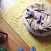 老犬との暮らしを快適に♪購入検討中のペット用品を公開