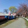 太平川観桜会 (秋田県秋田市)