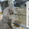 猫雑記 ~水槽の水換え~