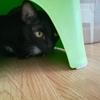 【猫ブログ】1ヶ月ぶりに猫に会う。あとは自転車