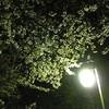 【手抜き日記】お花見2010