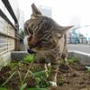 6月前半の #ねこ #cat #猫 その4