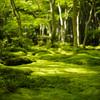 祇王寺の新緑
