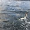 中潮の 大漁祈念 エソ図鑑。雨天後で強風の日の魚影調査