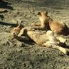 【群馬県富岡市】群馬サファリパーク~動物達がモコモコな冬のサファリパークの魅力~