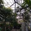 薬用植物園 温室
