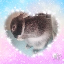 rabbit_runa's blog