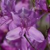 春の花♪ (築水)